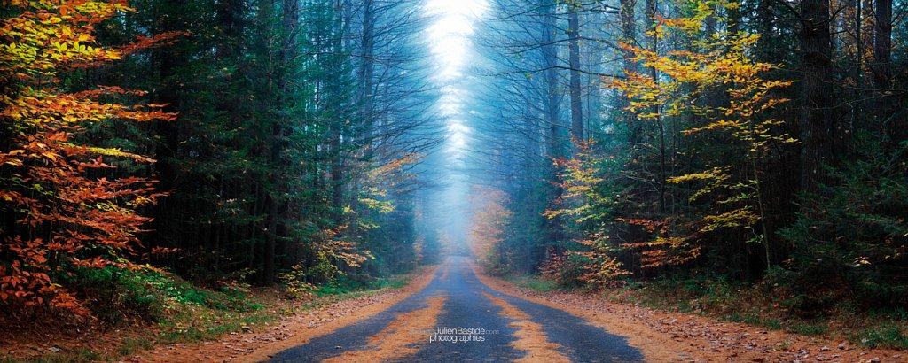 Bois embrumé dans les Adirondacks