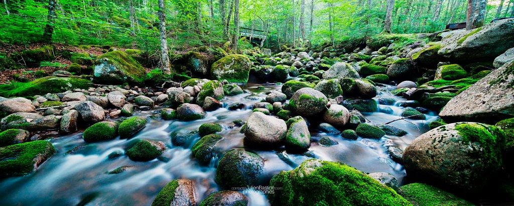 Ruisseau dans les bois